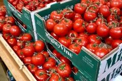 MV-tomatoes